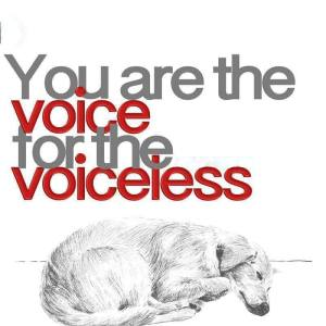 You are the voice for the voiceless